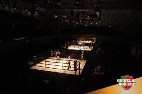 Boxe: Odivelas Box Cup